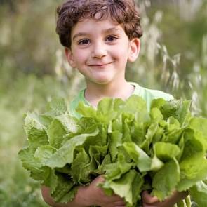 Certified Organic Vegetables