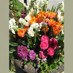 Carnival floral