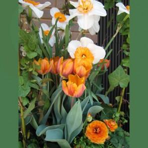 Orange floral designs
