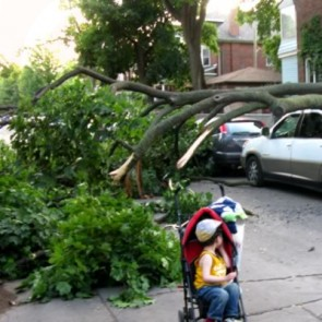 Storm Damage / Emergency Tree Cleanup