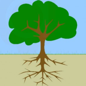 Tree Deep Root Fertilization - Spring and Fall