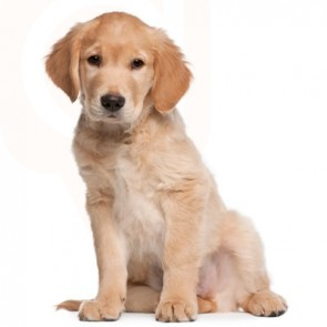 New Puppy Care