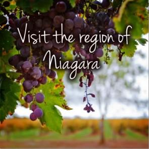 Niagara Wine Tasting Tours